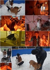 Участники волонтерского отряда в приюте для животных Ржевка